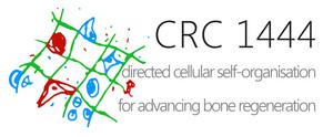 Logo des SFB 1444 Directed Cellular Self-Organisation for Advancing Bone Regeneration